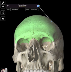 Essential Skeleton is an excellent interactive 3D iPad App for students and teachers to supplement their 2D textbook.<br>Rating: A+<br>Courtesy of 3D4Medical.com, LLC