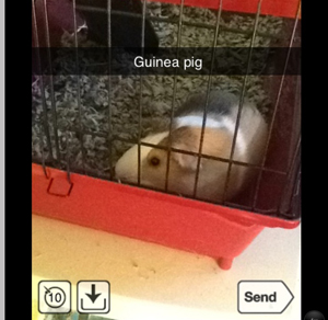 Snapchat is a fun, new app that allows you to take pictures and send them to your friends, while also dictating the amount of time they can view the picture. Rating: APhoto Credit: Hailey Basner