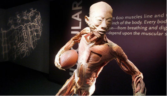 """BODIES...The Exhibition allowed students to view the multiple body systems, The Polymer Preservation Process, and learn more about the history of the anatomy of the human body. The tour starts with the Skeletal System and ends with the Circulatory System. """"I loved seeing the various body systems! I plan to pursue a career in the medical field so visiting the exhibit was very beneficial to me,"""" senior Selma Mesic said.  Photo Courtesy of BODIES...The Exhibition"""