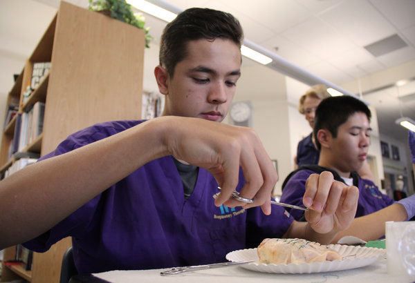 """After completing his first two sutures, junior Colby Ceniza creates a knot to start his instrument tie with a kelly clamp. Students created incisions in their chickens with razors to suture. """"I learned a ton about suturing from Mrs. Smith. She did a great job at preparing us and its a tool I'll carry on for the rest of my life,"""" Ceniza said. Photo Credit: Calida Tam"""